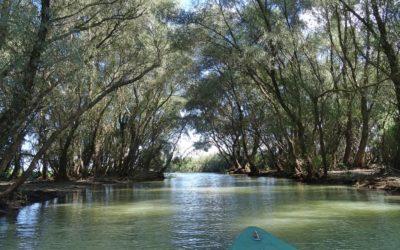 Going through the Danube Delta